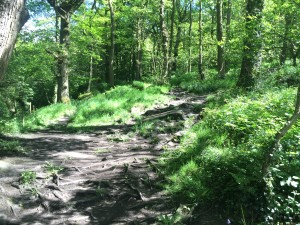 Fell / Trail running